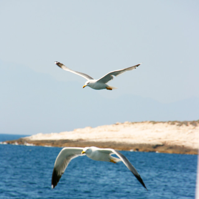 """Seagulls over the blue Aegean"" stock image"
