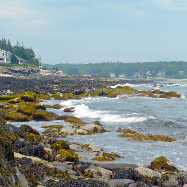 """Maine's Rocky Coast"" stock image"