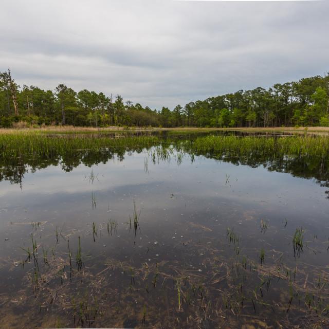 """""""Coastal swamp."""" stock image"""