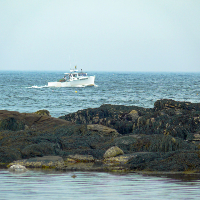 """Lobster Boat in Maine"" stock image"