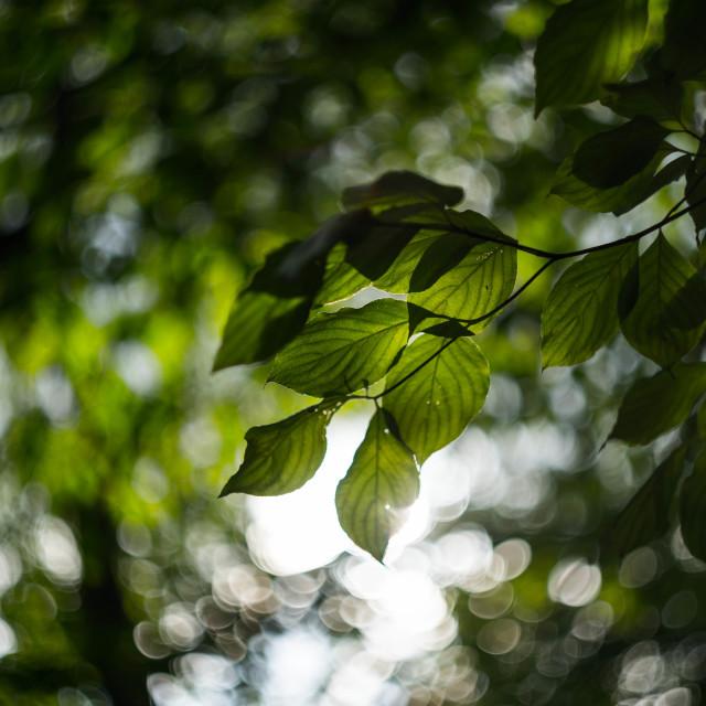 """""""Leaves Overhead"""" stock image"""