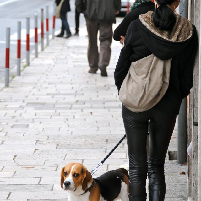 """""""Bored dog"""" stock image"""