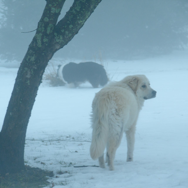 """Fog and Dog"" stock image"