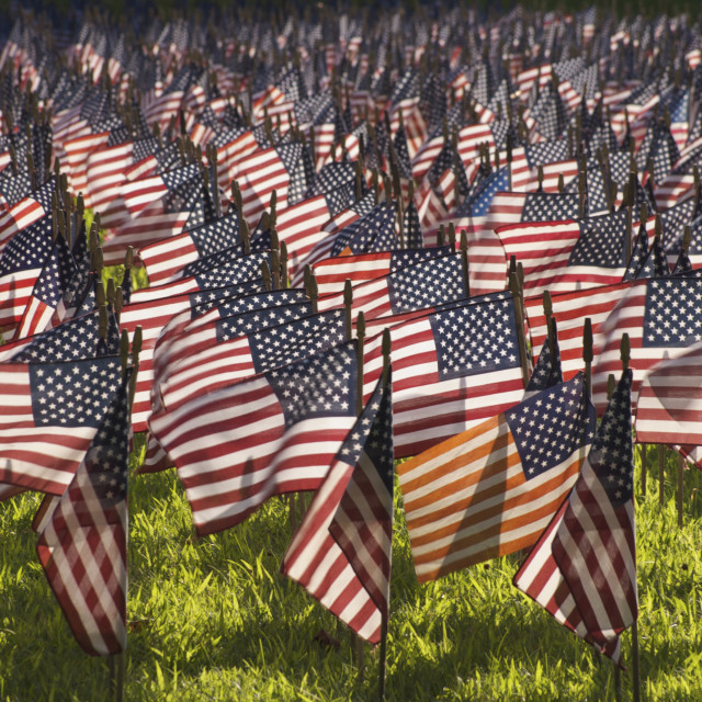 """""""Field of Flags"""" stock image"""