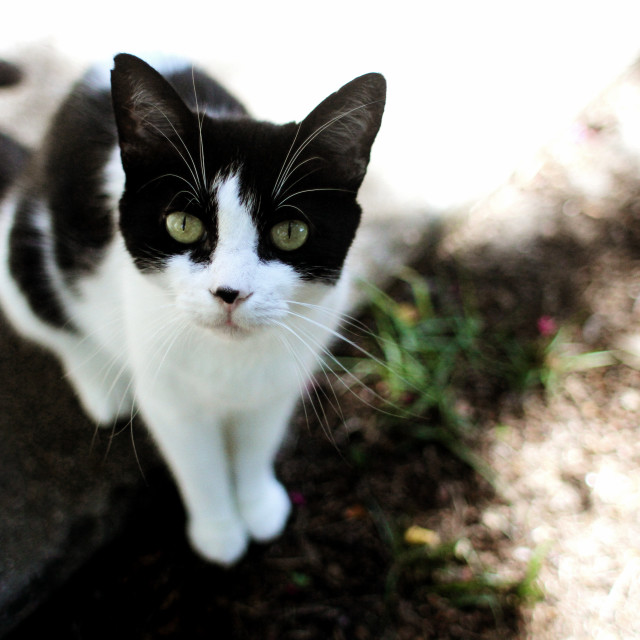"""""""South Carolina Kitty"""" stock image"""