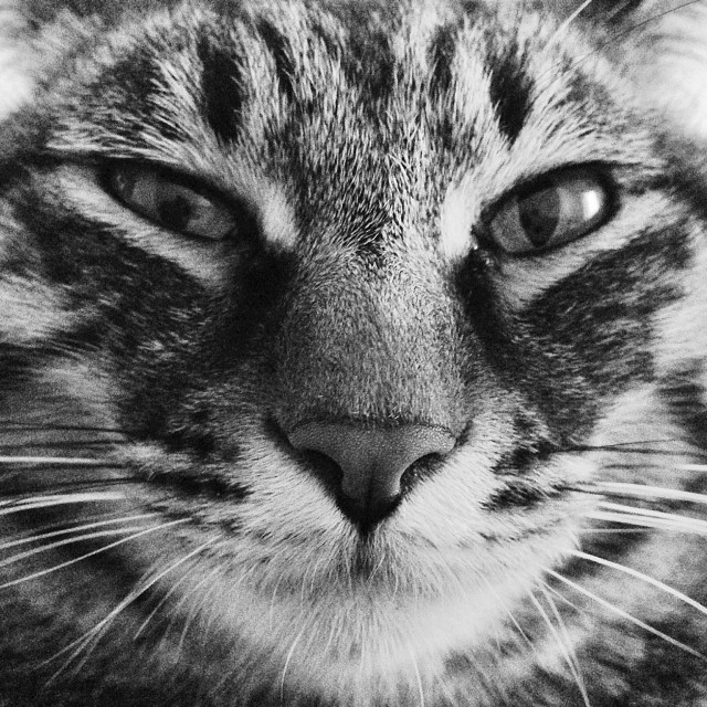 """Cat Close-Up"" stock image"