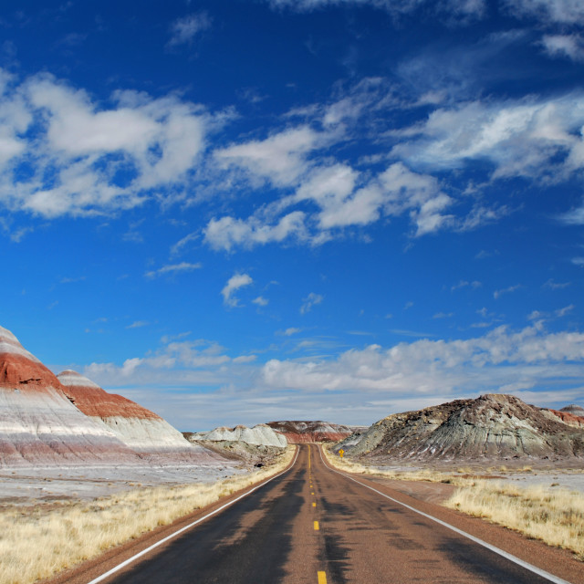 """Petrified Forest, Arizona"" stock image"