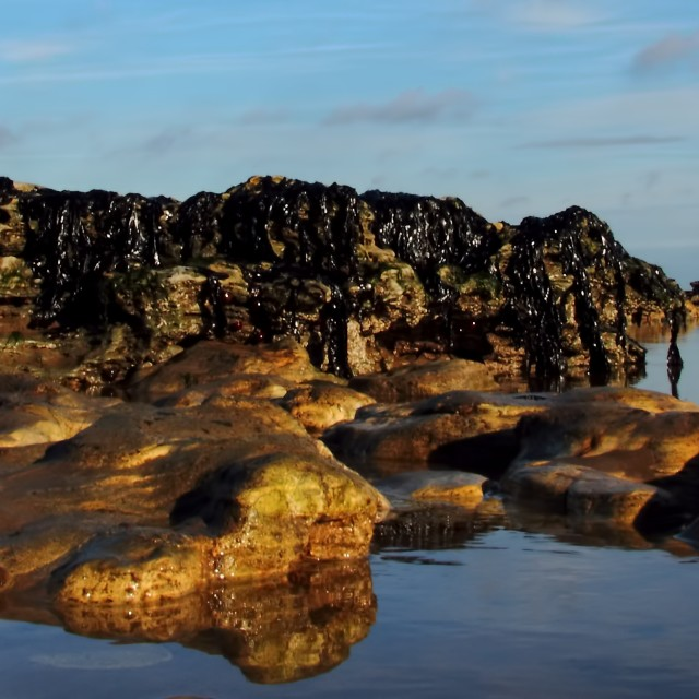 """Reflections in a rock-pool"" stock image"