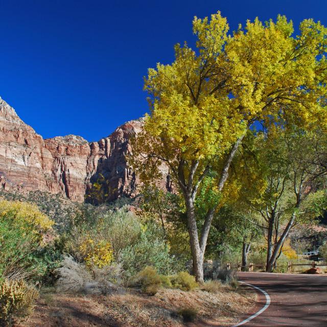 """Zion National Park, Utah"" stock image"