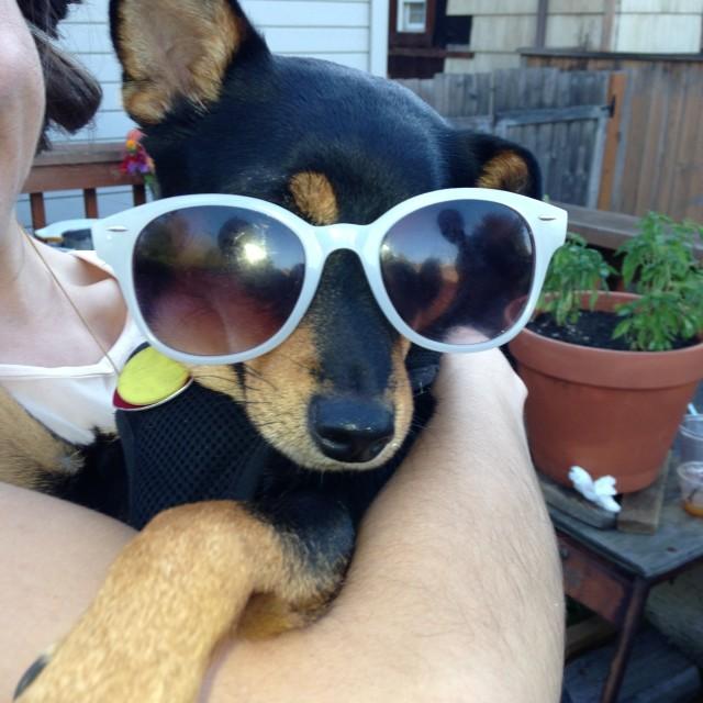 """""""Glamorous dog"""" stock image"""