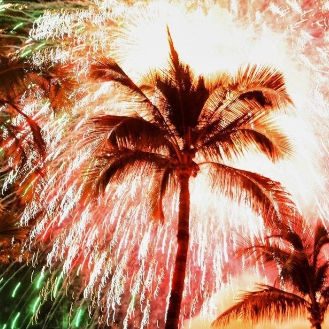 """Fireworks a d palm"" stock image"