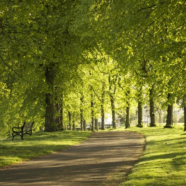 """Inverleith Park, Edinburgh"" stock image"