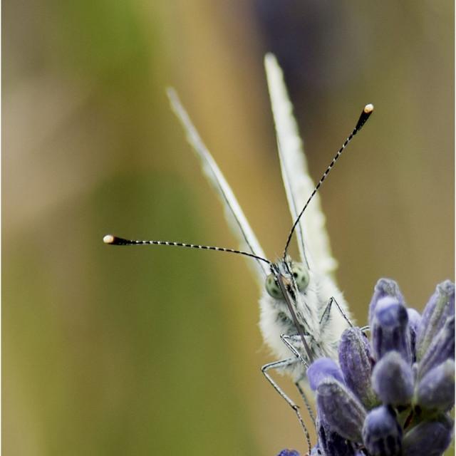"""""""Bug Eyed"""" stock image"""
