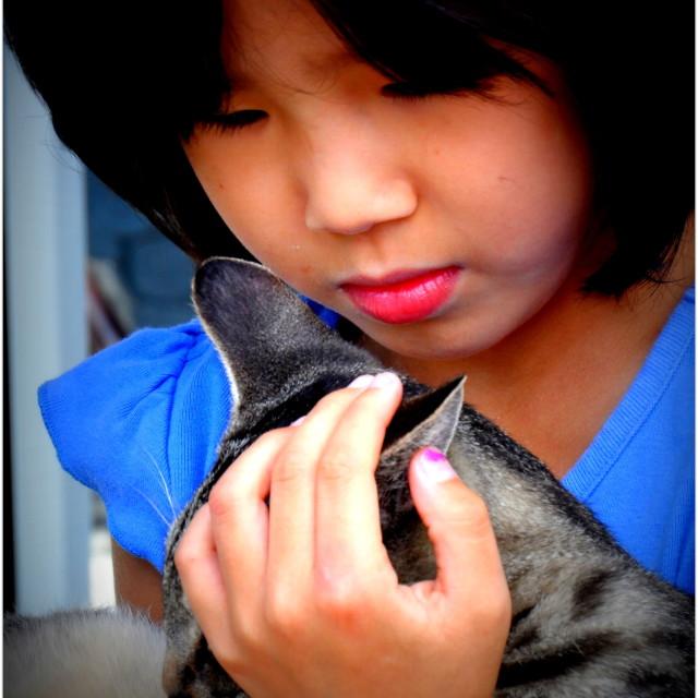 """New Cat"" stock image"