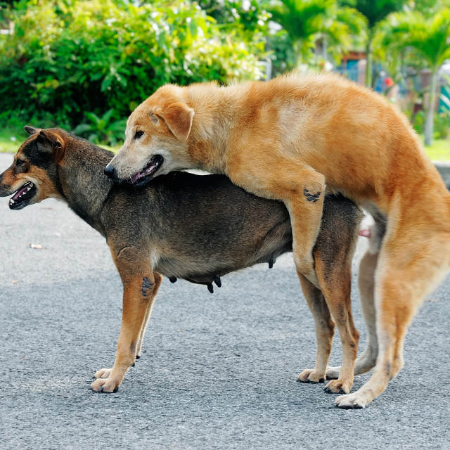 Image result for mating dogs