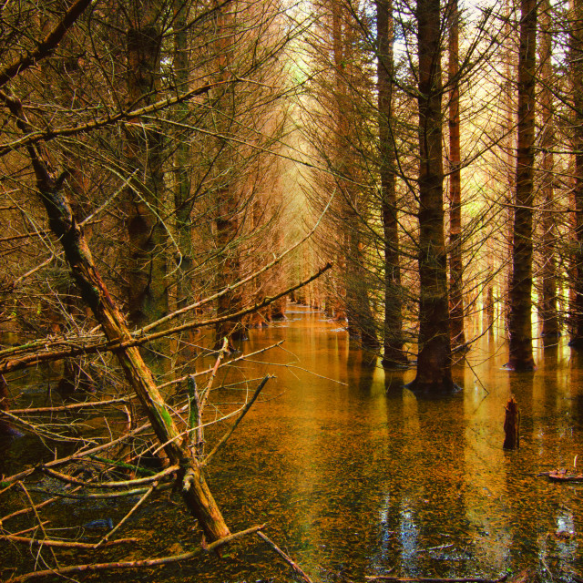 """Glendalough House Submerged Forest"" stock image"