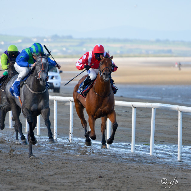 """Horse Racing on Laytown Beach"" stock image"