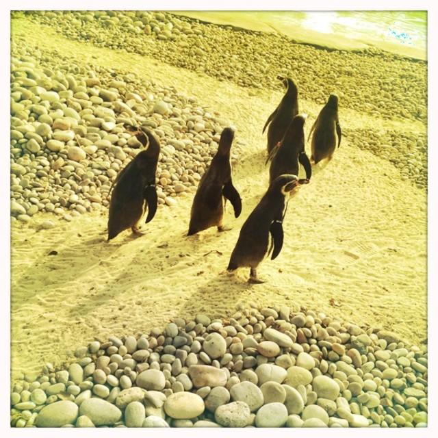 """Penguins"" stock image"