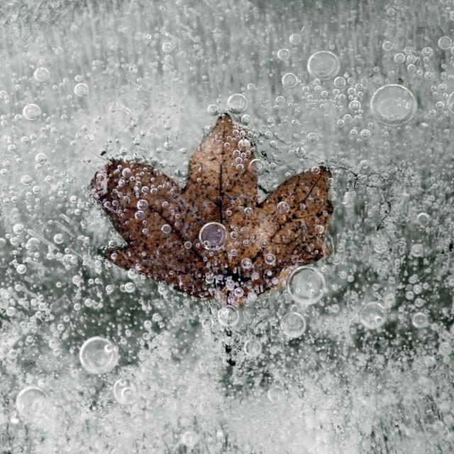 """Winter Leaf"" stock image"