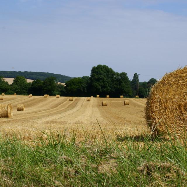 """Harvestime"" stock image"