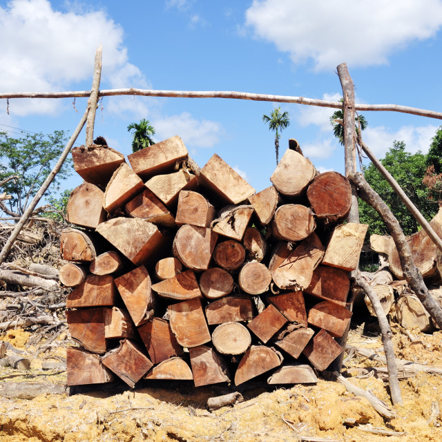 """Woodpile"" stock image"