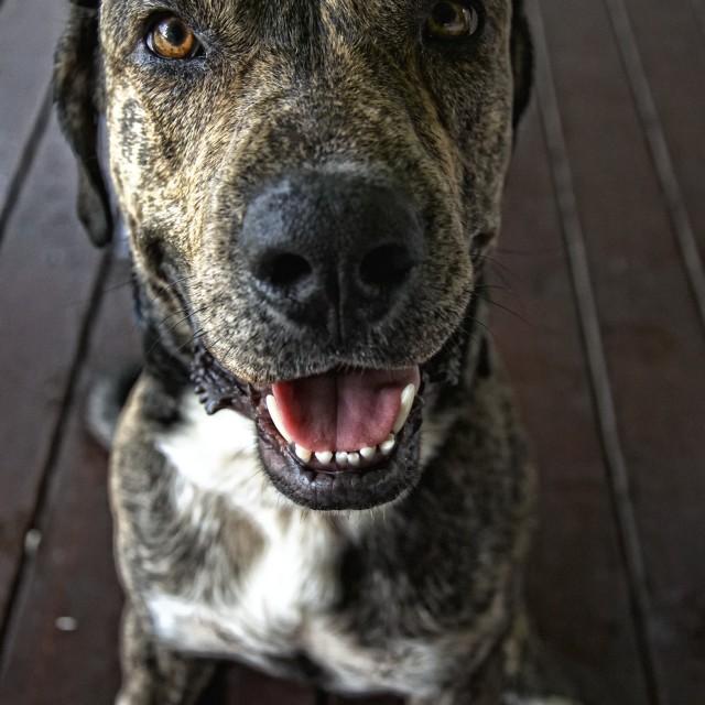 """Zeus the dog, St Lucia"" stock image"