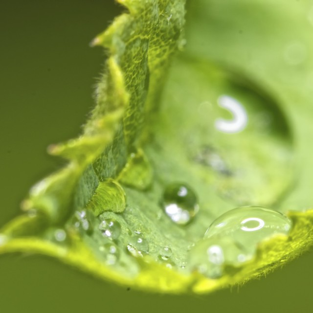 """Water drops on a leaf macro"" stock image"