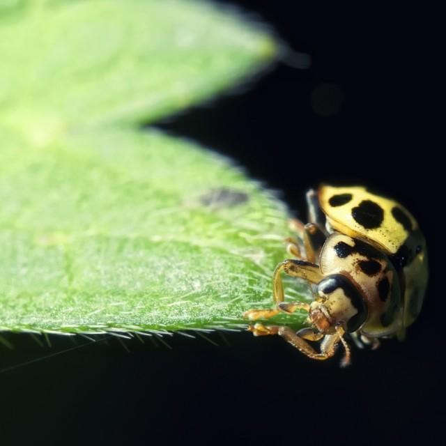 """bug on a leaf"" stock image"
