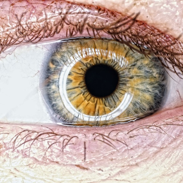 """Green and hazel eye"" stock image"
