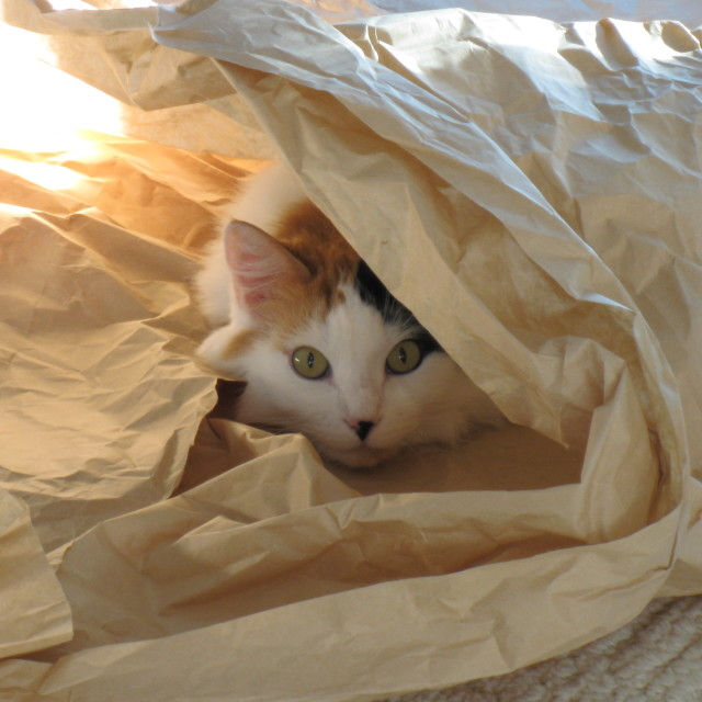 """Calico cat in hiding"" stock image"