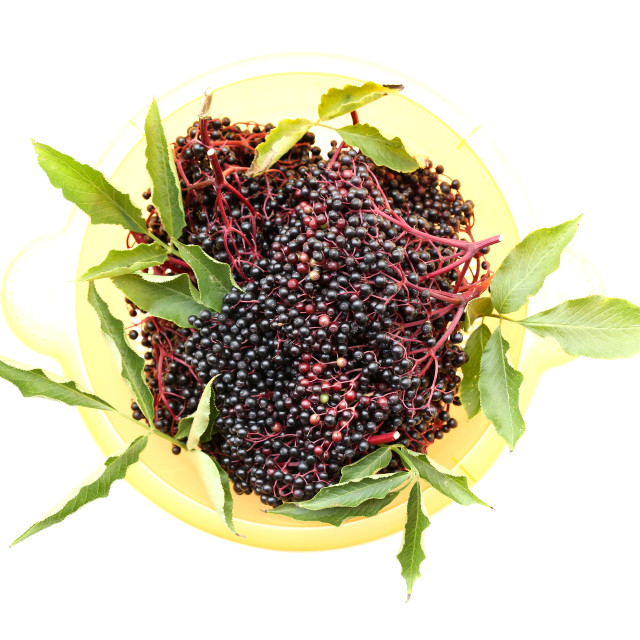 """Elder Berries in a bowl"" stock image"