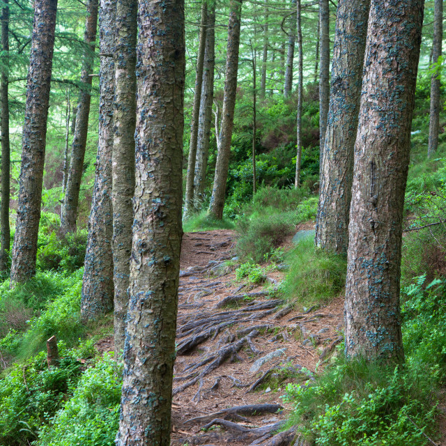 """""""Forrest Path"""" stock image"""