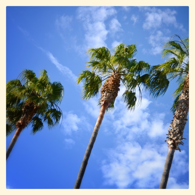 """Three palms"" stock image"