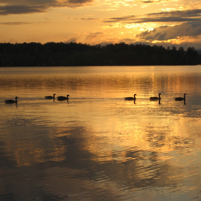 """Geese at Sunset"" stock image"