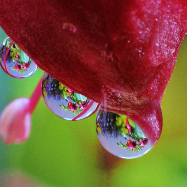"""""""Water Drop Reflections"""" stock image"""