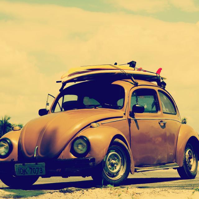 """Surf beetle"" stock image"