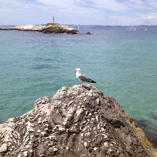 """seagull on rock"" stock image"