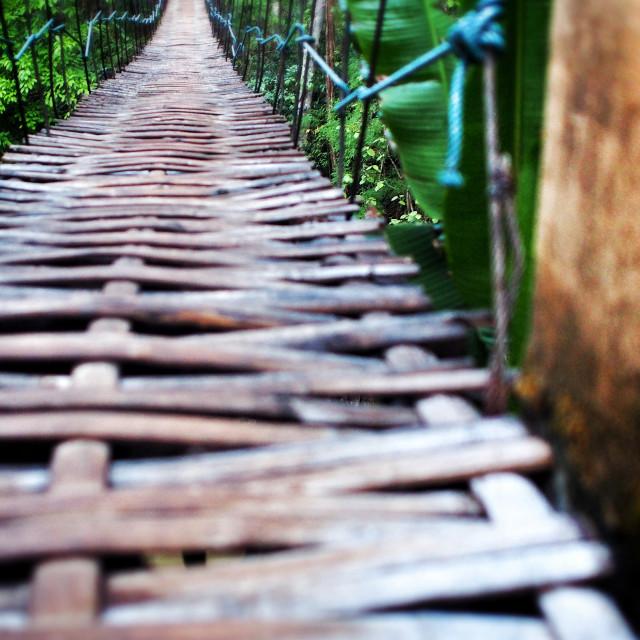 """A Bamboo Bridge in The Jungle"" stock image"