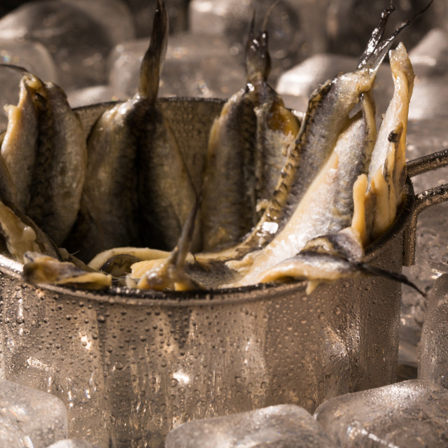 """Anchovies on ice"" stock image"