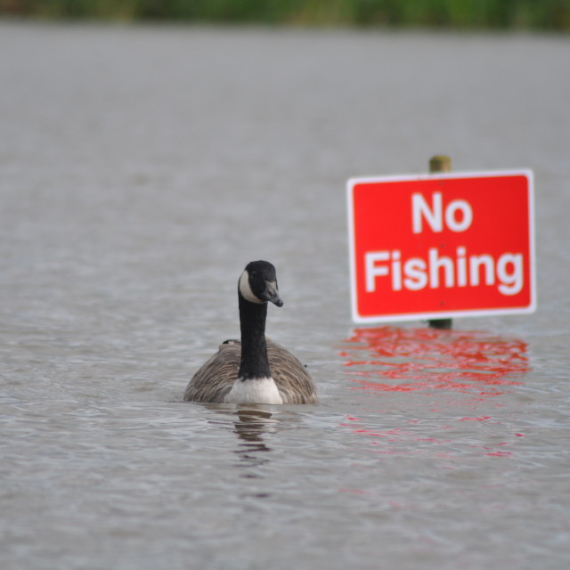 """No Fishing sign"" stock image"
