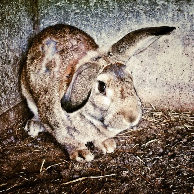 """Bunny"" stock image"