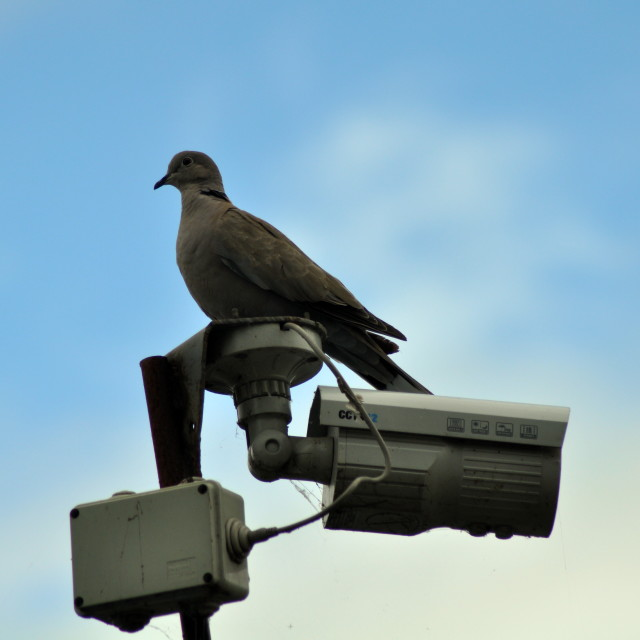 """Colored Dove Sat on top of Camera"" stock image"