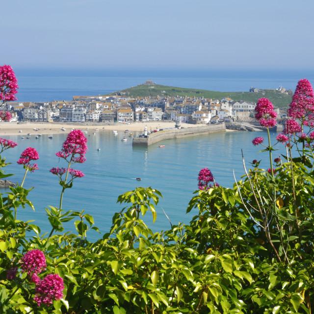 """St. Ives wild red Valerian, Cornwall UK."" stock image"