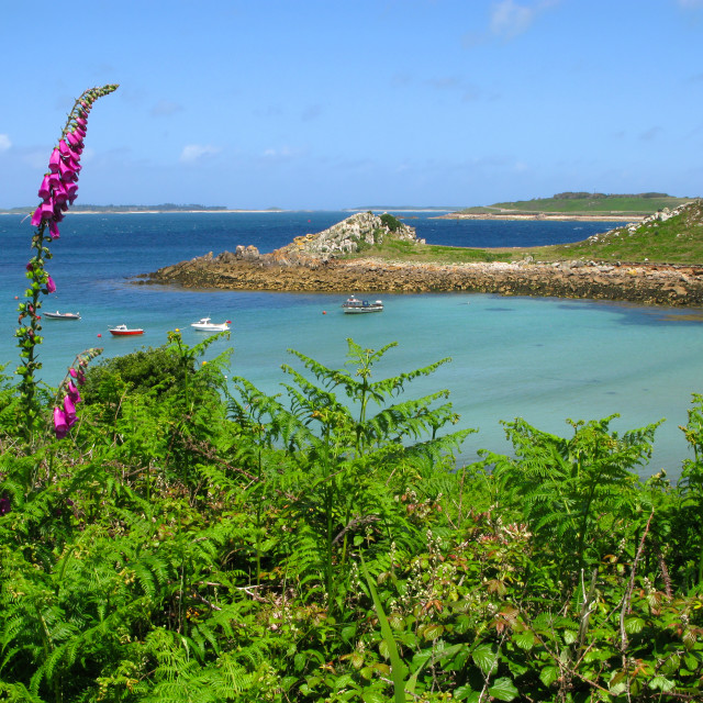 """""""Wild foxglove and fern, St. Agnes and Gugh, Isles of Scilly."""" stock image"""