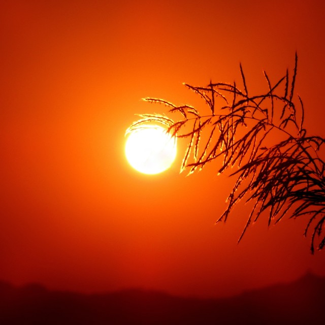 """""""Atypical """"Sun""""-flower"""" stock image"""