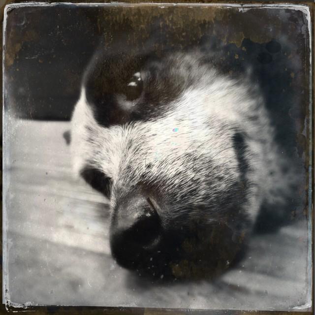"""""""Sleepy dog"""" stock image"""