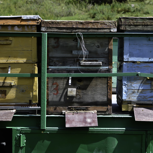 """Bee Boxes in Krygyzstan"" stock image"