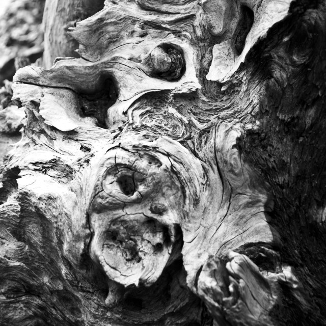 """Face in Driftwood"" stock image"