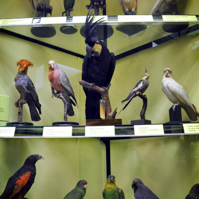 """Aviarium"" stock image"