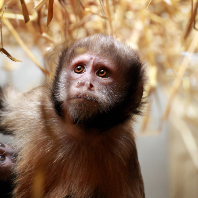 """Sad Monkey"" stock image"